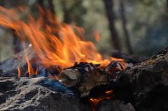 DSC_7034 (tatrozenfeld@yahoo.co.il) Tags: 2014 семья лес люди друзья алиса прогулка израиль даша грибы каплан зархи аркашаитаня