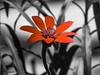 Red Flower (Marcos Simanovic) Tags: flowers red brazil flores flower brasil flor vegetation redflower vegetação pétalas parqueibirapuera florvermelha manequinholopes viveiromanequinholopes simanovic