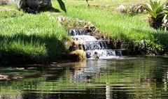 Ele  o responsvel! (Rctk caRIOca) Tags: rio de janeiro botnico jardim