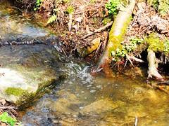 sauberes Wasser (Sophia-Fatima) Tags: water deutschland wasser nrw sauber badsalzuflen klar