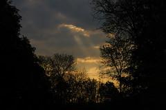 petit matin fort de Guines (vieubab) Tags: nature lumire branches ombre arbres nuages paysage extrieur sentier chemin fort goldenhour bois calme aube feuillage troncs atmosphre branchage luminosit levdujour sonyflickraward