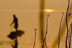 Hunting (Anand Raghavan) Tags: morning color water fishing fisherman waiting dragonfly photowalk wait whitebalance refelction cwc chengalpet chennaiweekendclickers kolavai kolavailake