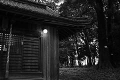 Electric light (odeleapple) Tags: light lamp nikon shrine grove af nikkor 28105mm d810