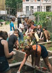 HarlemGrown-24 (United Nations International School) Tags: school students gardening farming volunteer unis composting harlemgrown