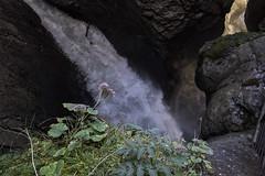 Trummelbachfalle - cachoeira ao fundo e flor no primeiro plano (CartasemPortador) Tags: bern lauterbrunnen cachoeira quedas interlaken dgua trmmelbach trmmelbachflle