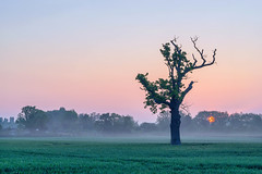 This Mornings Sunrise (jactoll) Tags: light mist tree misty zeiss sunrise landscape dawn sony arrow warwickshire lonetree 70200mmf4 a7ii jactoll