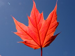 Red Spring Maple Leaf (Stanley Zimny (Thank You for 18 Million views)) Tags: red leaf maple seasons
