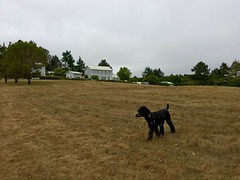 Theo's World (Living in Monrovia) Tags: sky dog black grass painting outdoors open exploring hill gray wide wyeth christinasworld wandering standardpoodle