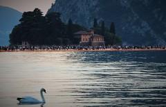 Lago d'Iseo (Bi_photo) Tags: passerella christo lagodiseo italia italy lake cigno lago acqua camminare sulzano art lombardia explore animal thefloatingpiers