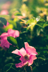 (Jack Wassell) Tags: ocean flowers light shadow sea roses sun flower rose canon coast dof bokeh maine newengland depthoffield kennebunkport flare coastline northeast atlanticocean wildroses jackwassell jackwassellphotography
