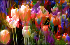 tulips from the home planet (Sunnyvaledave) Tags: abstract tulips