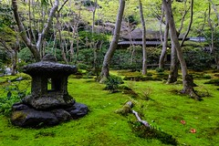 Gio-ji I (Douguerreotype) Tags: tree green japan garden temple moss kyoto shrine buddhist lantern