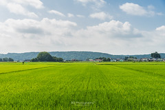 Pastoral scene. (bgfotologue) Tags: 2016 500px aomori bgphoto bluesky ceremony countrys festival field green image imaging japan landscape outdoor photo photography rural sky summer touhoku towada tumblr village bellphoto