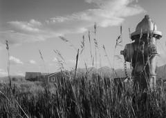 sparky (HOOVER14) Tags: westcilffe colorado fire hydrant kodak brownie star flex camera analof black and white film