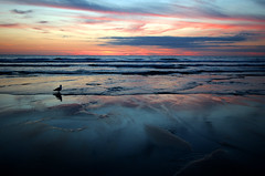 Sunset in Cornwall (Wilamoyo) Tags: cornwall2016 beach sunset sundown sky beauty seagull bird reflections light landscape blues reds pinks sand cloud