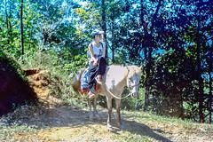Horseback Sitting (hiphopmilk) Tags: film analog analogue 135film 35mm kodak kodakfilm yashica yashicaj jaredyeh hiphopmilk nepal pokhara kaski gandaki phewa lake tal fewa sarangkot kaskikot horse horseback riding sitting ride tree mountain girl