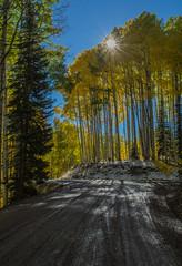 Aspen Sunburst (Nancy King Photography) Tags: aspens colorado fall keblerpass rockymountains sunburst