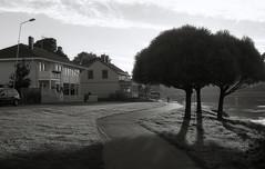 Off in the distance (Magnus Bergstrm) Tags: canonae1 canon ae1 analog bw blackwhite blackandwhite kodak kodaktmax100 kodaktmax tmy 100tmx sweden sverige karlstad vrmland sun shadow tree trees house houses biker road