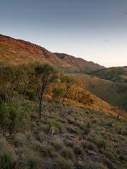 last light on the range (liam.jon_d) Tags: australia australian australiannationalpark billdoyle dutchmans dutchmansstern dutchmanssternconservationpark evening flinders flindersranges landscape lastlight mountain nationalpark range sa southaustralia southaustralian sunset theflinders pickmeset