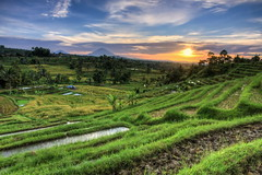 Jatiluwih (Adi Vlado Kristanto) Tags: bali ricefields jatiluwih tabanan subak