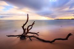 driftwood under moving sky (lee scott ) Tags: usa hawaii kauai leescott rightsmanaged photographybyleescott