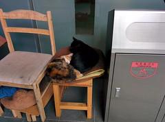 The cats of Keio SFC, building  (tripu) Tags: november autumn cute beautiful japan cat campus chair warm university sunny kanagawa sfc shonan fujisawa keio shonandai 2014 keiouniversity shonanfujisawa