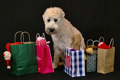 Black Friday (Eric.Ray) Tags: dog dogs digital canon project eos photo furry daily 365 doghouse dslr fabulous challenge doglovers