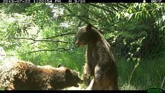 Summer '14 Trail Camera Footage