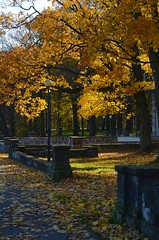 Golden Polish autumn (monika & manfred) Tags: park trees adam nature leaves poland visit mm silesia