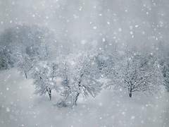 Winter Magic (R_Ivanova) Tags: nature winter snow white tree textured landscape bulgaria gabrovo българия габрово зима риванова rivanova fav20