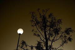 Interlude I (shumpei_sano_exp4) Tags: light sunset bw tree lamp monochrome sepia canon eos orlando italia tramonto streetlamp bn 5d canon5d albero luce lecce lampione seppia mybook 32mm cfp canoneos5d monocromatico eos5d canonef24105f4lisusm ecotekne jjjohn70 jjjohn ~jjjohn~ giovanniorlando circolofotograficopaullese wwwgiovanniorlandoit
