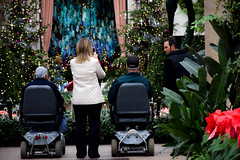 2014.12.20 Longwood Gardens, Kennett Square, PA (Katie Wilson Photography Adventures) Tags: santa christmas wood bridge trees winter decorations roses plants fountain birds animals rose gardens sparkles stairs outdoors photography lights student woods stream lily mask lotus photos pics snapping pennsylvania path vibrant nye country poinsettia joy ivy peacock indoor conservatory bamboo lg adventure pa masks chandelier hibiscus ornaments copper newyearseve learning lillies practice fountains christmastrees benches waterfountain wonderland decor ponds botanicalgardens longwoodgardens steamy longwood christmastime cardinals peacocks blooming nests masqueradeball makeawish kennettsquare katiewilson katewilson feelingalotlikechristmas