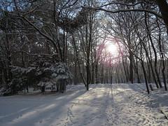 00712552 Winterimpressionen (golli43) Tags: christmas winter sunset sun streets rain sunrise mond heaven advent himmel wolken dezember neighbours sonne silvester nachbarn neujahr homesweethome regen weihnacht spaziergänge jahreswechsel 2015 streetlive