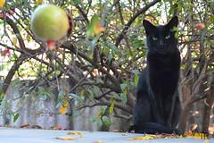 (Bloody Vic) Tags: black tree cat mexico arbol bad gato luck stare mala suerte