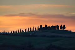Cypress in the Orange Glow of a Tuscany Sunset (MrBlackSun) Tags: christmas sunset italy landscape nikon tuscany valdorcia toscane 2014 d600 orcia sanquiricodorcia sanquirico nikond600