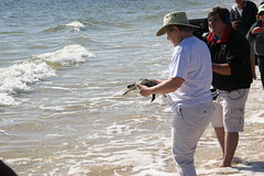 IMG_1438 (MyFWCmedia) Tags: nature island florida turtle wildlife release conservation seaturtle saltwater stgeorgeisland gulfworld fwc floridafishandwildlife myfwc myfwccom