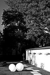 jnowak64 (jnowak64) Tags: bw poland polska krakow natura cracow mik wiosna malopolska przyroda ogrod krakoff muzeumnarodowewkrakowie