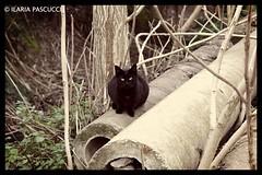 gatto (ilaria_pascucci_photographer) Tags: canon dettagli prato galleria gattonero eos1200d