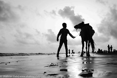 Life around Kuakata (Shahriar Elahi) Tags: life light sea horse beach water beautiful animal silhouette wow bangladesh