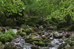 sorgente Iannanghera (daniele ideale costanzo) Tags: primavera acqua ruscello muschio fonte abruzzo bosco civitella sorgente alfedena