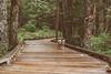 Forest Sage (Jake Arciniega) Tags: 50mm14 mtsthelens pomchi canon7dmarkii vscofilm
