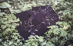 Impermanncia (Tuane Eggers) Tags: film 35mm book handmade photobook impermanence livro impermanncia