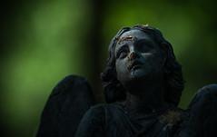 Angel, Oud Eik en Duinen Cemetery (xipevideo) Tags: green netherlands cemetery graveyard statue angel dark death nikon dof nederland denhaag engel nikkor thehague dood beeld begraafplaats 80200 d600 nikon80200mm oudeikenduinen