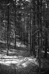 Sottobosco (lucapando) Tags: primavera alberi sole montagna bosco sottobosco aghidipino