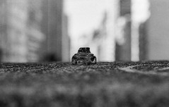 (glauberpitfall) Tags: bw film contrast 35mm dof trix gray grain ishootfilm filmphotography pentaxspotmaticf filmisnotdead takumar50mmf14 filmacamera
