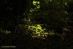 The Mysterious Way (Michelle Christin) Tags: wood shadow sun green mysterious grn sonne wald schatten