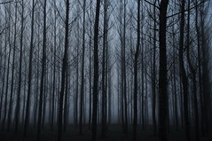 Foggy Forest (Jordi sureda) Tags: trees light naturaleza black nature mystery forest dark landscape photography photo nikon arboles negro paz natura arbres bosque catalunya fotografia nikkor niebla misterioso bosc oscuridad paisatge tranquilo boira d90 foggyforest jordisureda