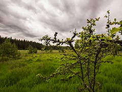 Wilde Lichtung (Stephanie Mnner Photography) Tags: berg outdoor pflanzen feld wiese himmel wolken landschaft wald horizont fichte lichtung