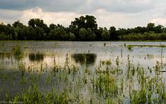 Rhenen (Ren Blauwendraat) Tags: lake reflection tree green nature water grass nikon meer forrest 28 rhenen d610 2470