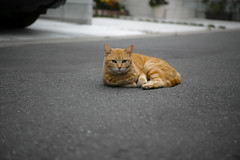 Stray cat (@shinxing) Tags: cat sigma foveon dp3m ft1201